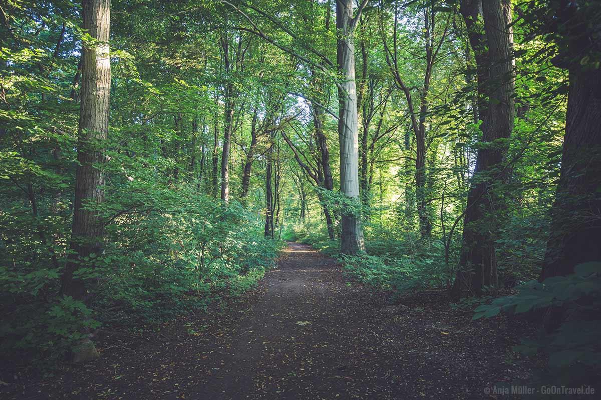 Der Plänterwald ist eine schöne Naturoase in Berlin