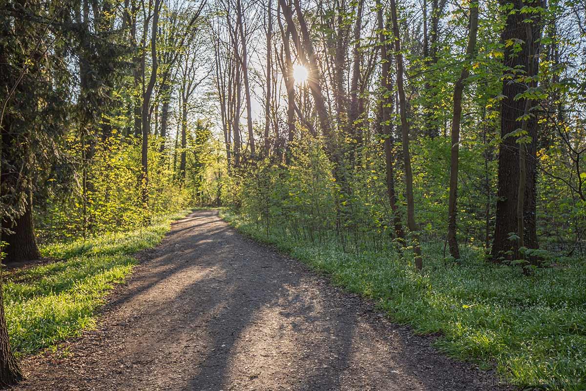Wanderweg im Pläterwald