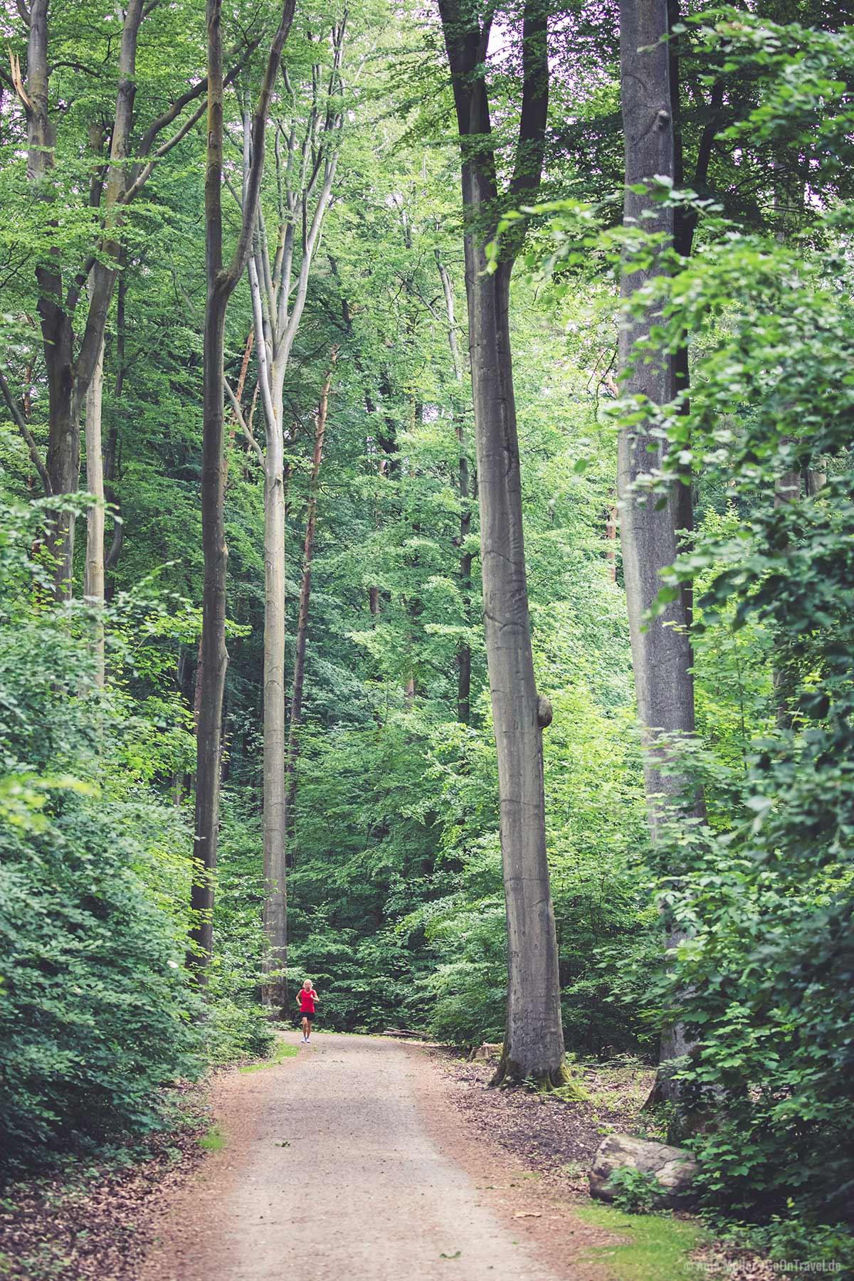Beliebte Laufstrecke im Tegeler Forst