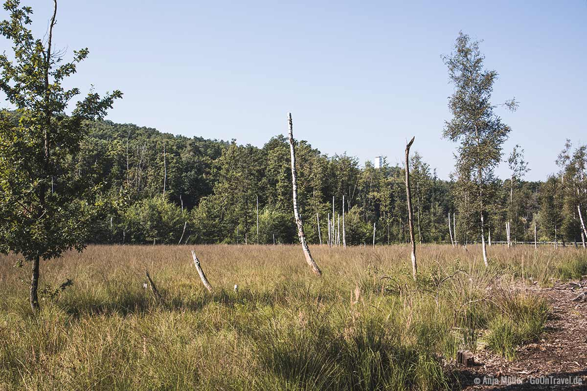 Teufelsberg mit Blick auf die Müggelberg und den Müggelturm