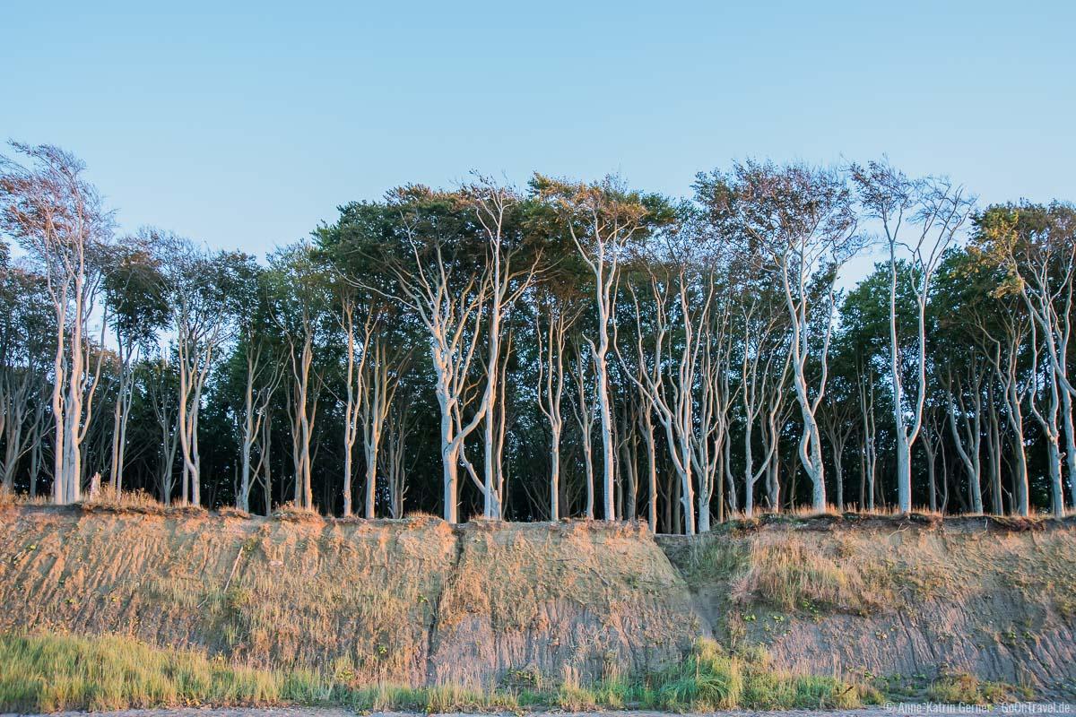 Erosionsrinnen an der Steilküste des Gespensterwaldes