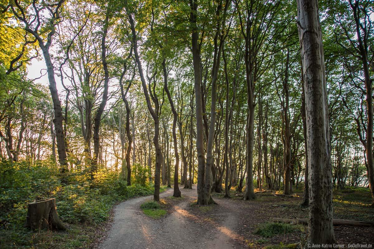 Viele Wege führen durch den den Gespensterwald