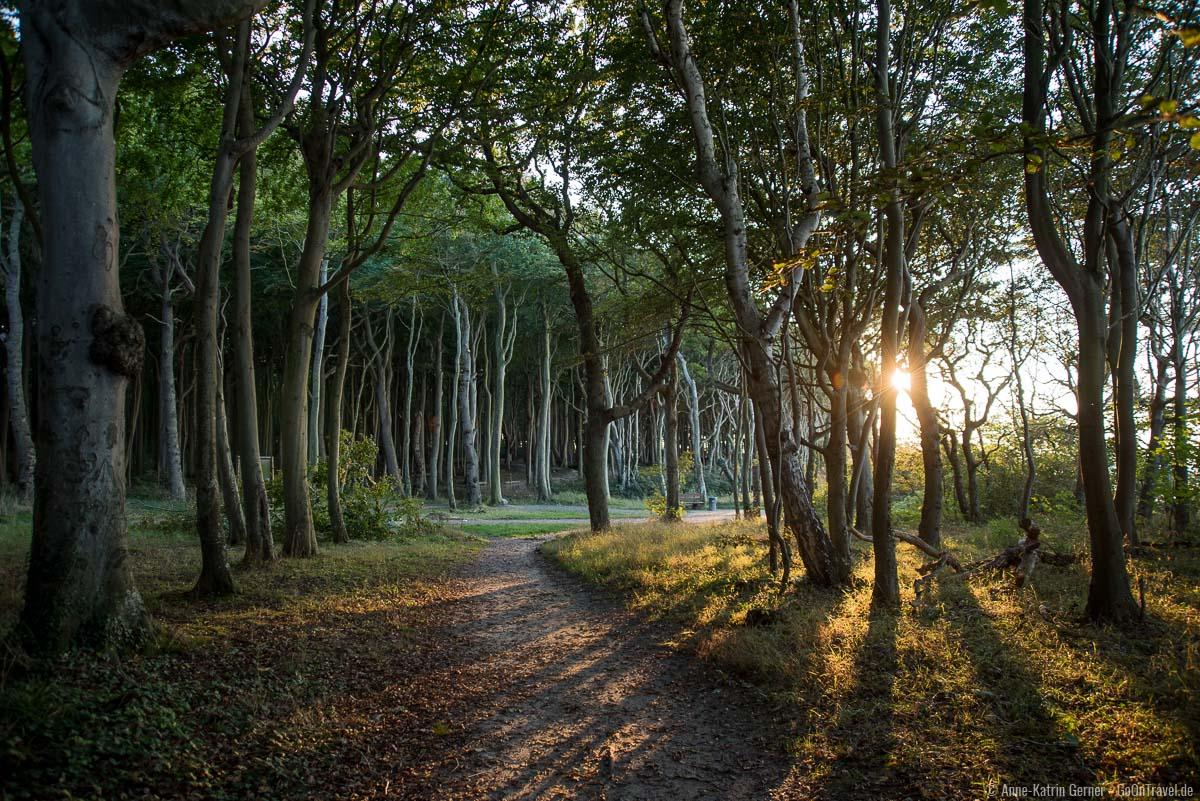 Radweg durch den Gespensterwald
