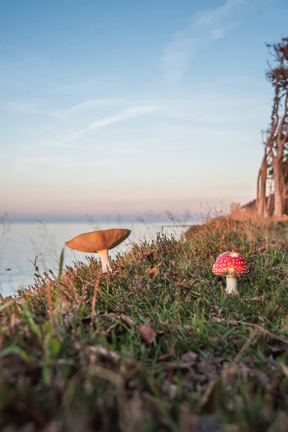 Am Klippenrand wachsen im Herbst beliebte Fotomotive