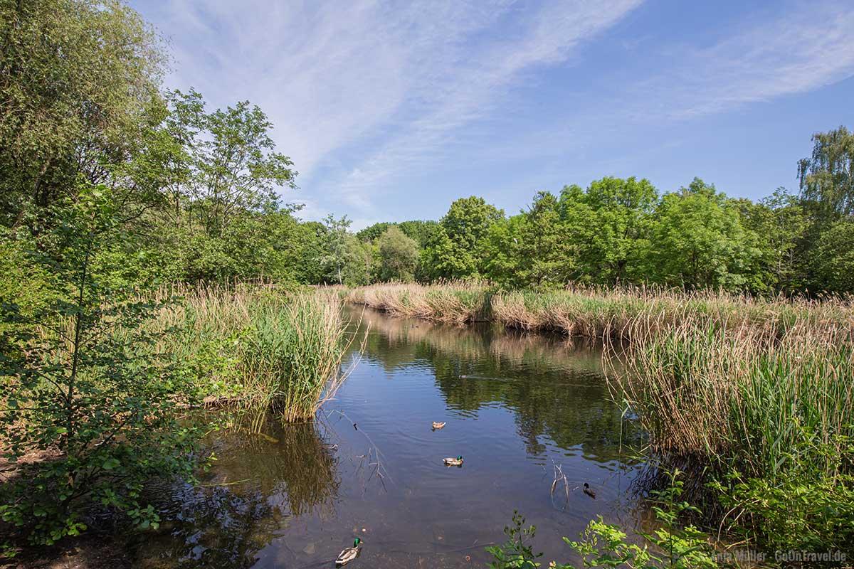 Blick auf den Rixdorfer Teich