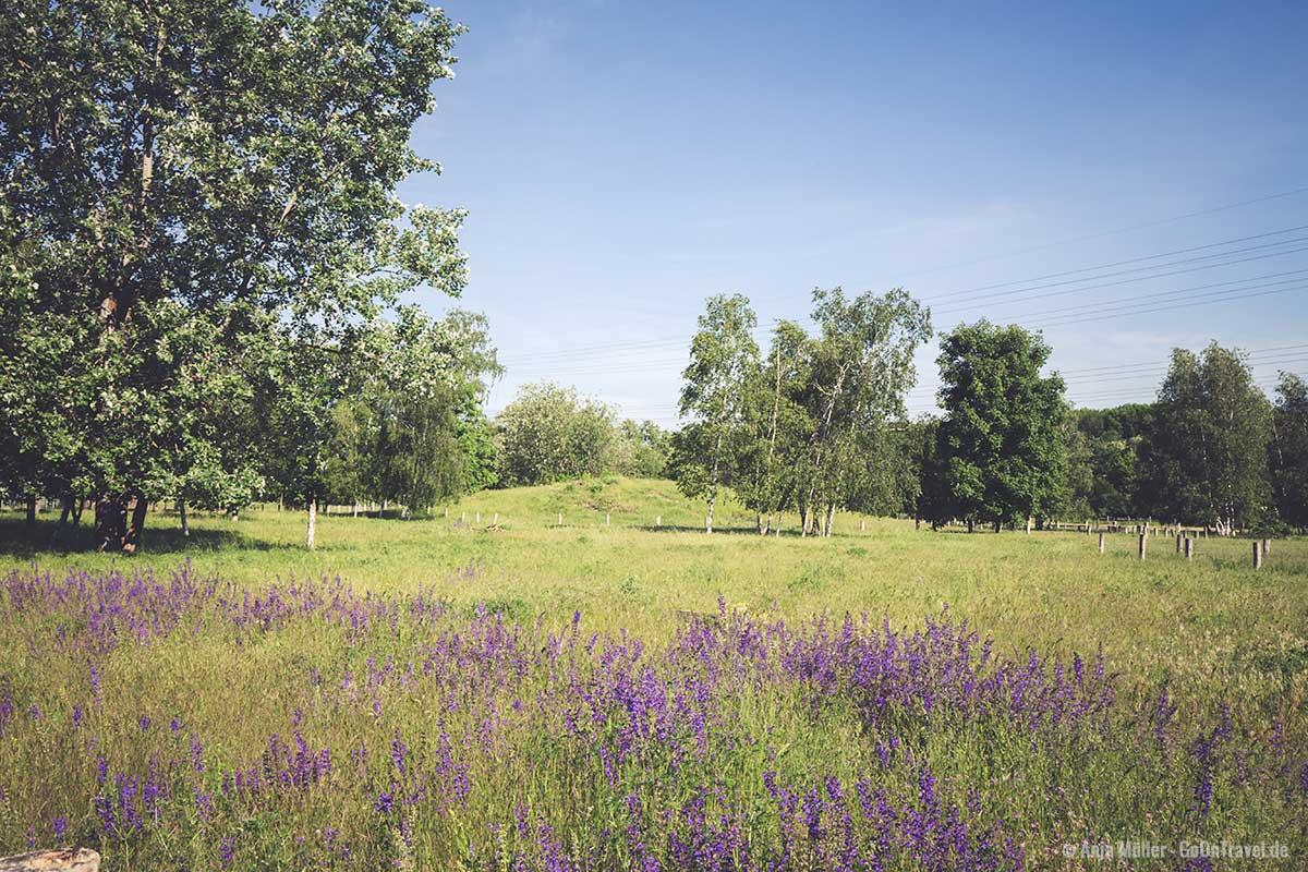 Idylle im Landschaftspark Herzberge