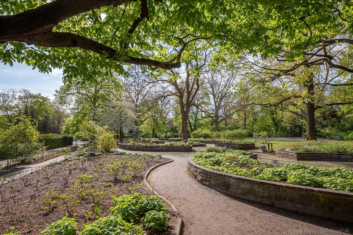 Garten im Viktoriapark