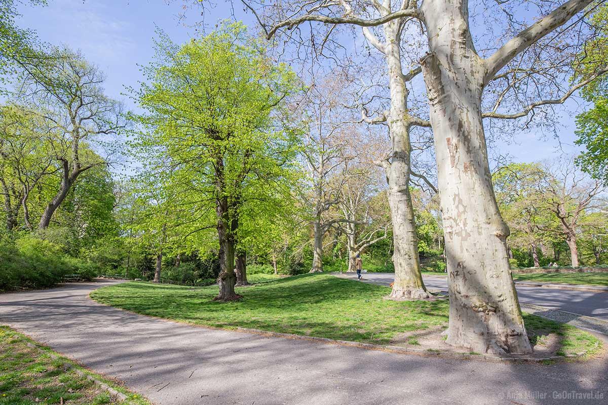 Weg im Viktoriapark