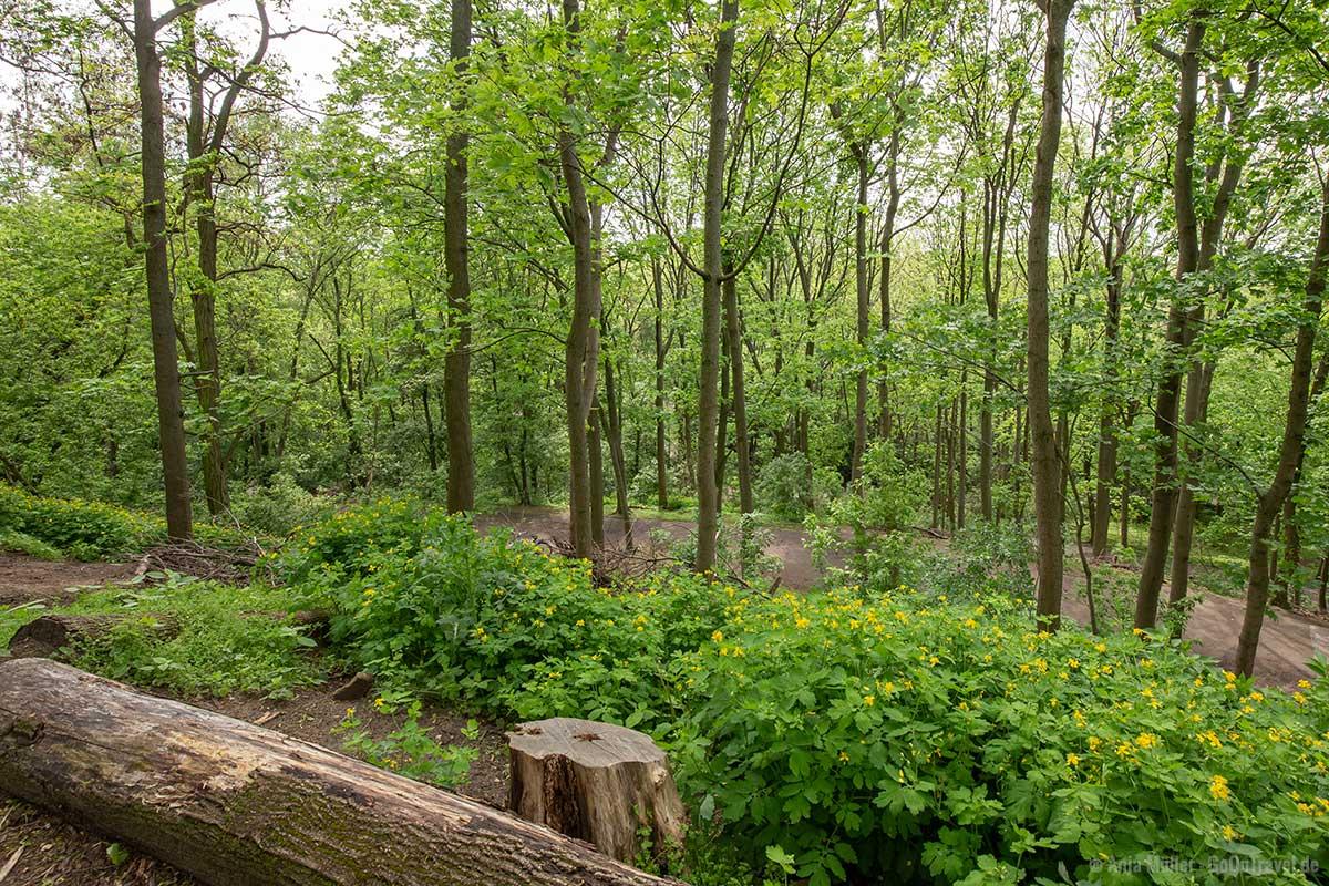Weg zum Aussichtspunkt im Volkspark Humboldthain