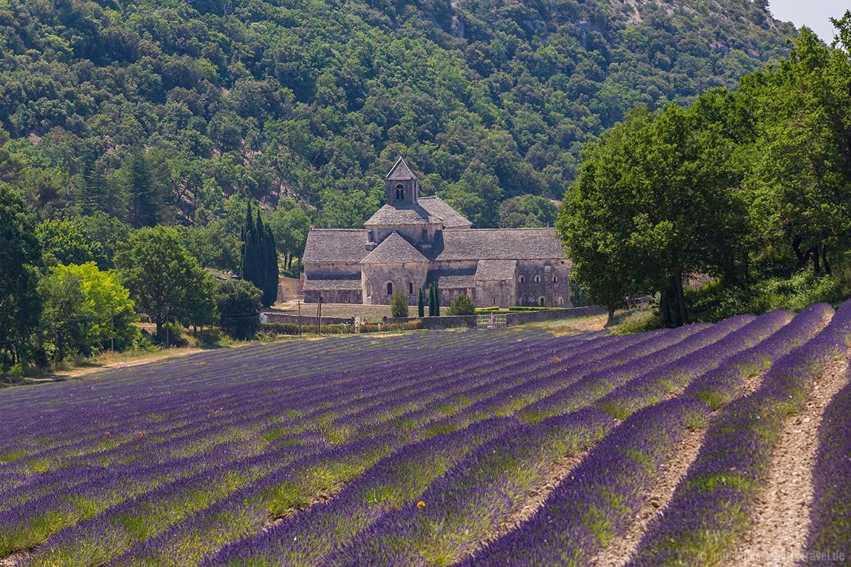 Lavendelfeld vor der Abbaye Notre-Dame de Sénanque