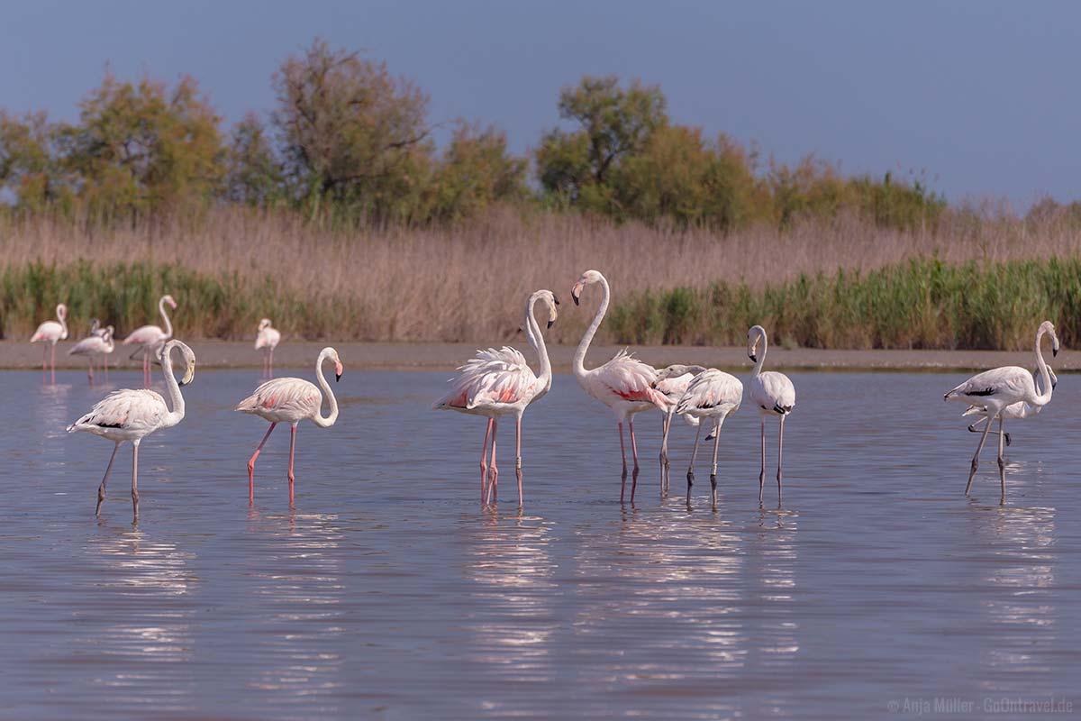 Flamingos gibt es auch in der Provence