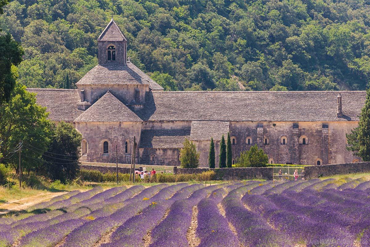 Die Abbaye Notre-Dame de Sénanque mit Lavendelfeld