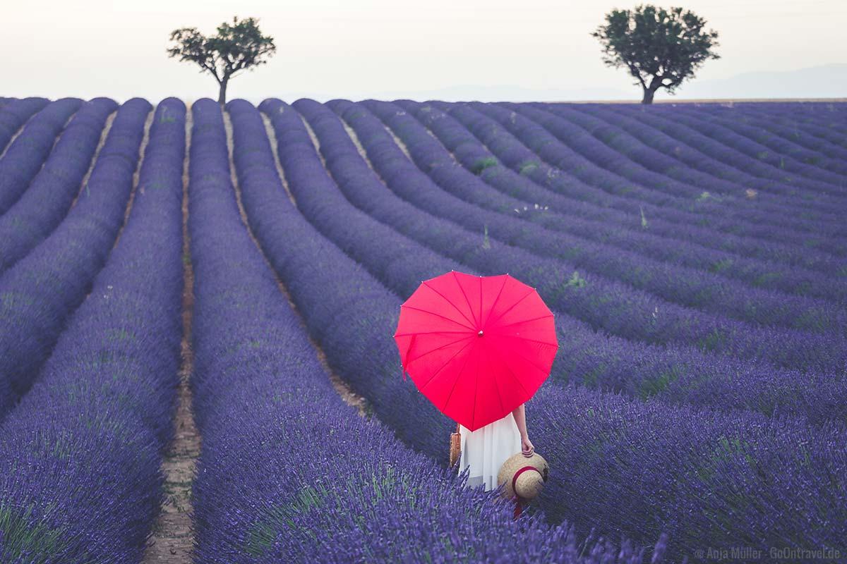 Posieren im Lavendelfeld
