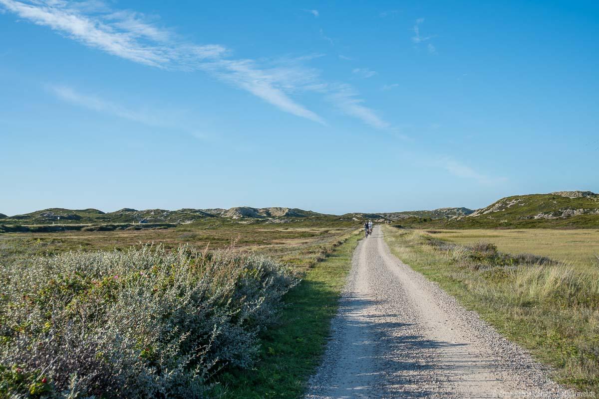 Traumhaft Radeln zwischen Heideflächen und Watt auf Sylt