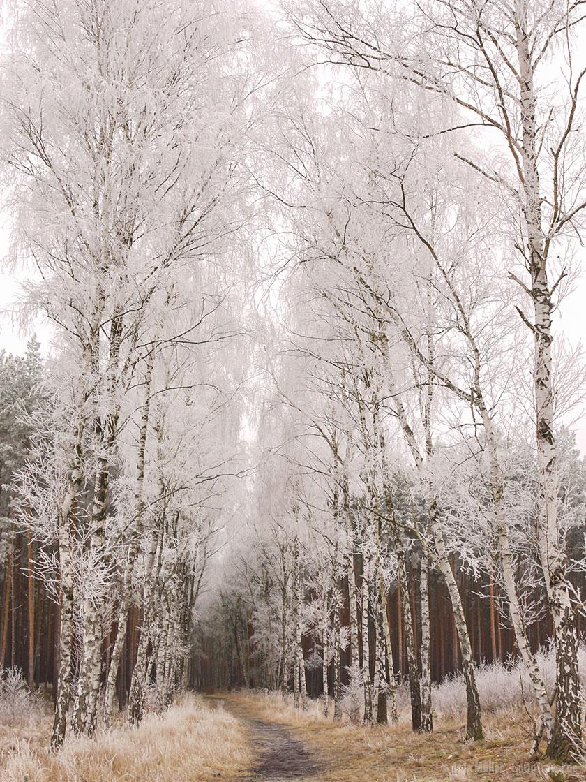 Raureif an Bäumen