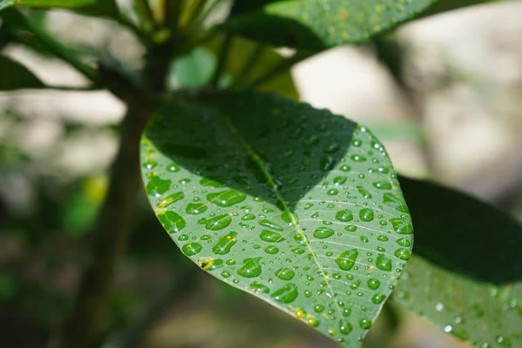 Ab Mai ist Regenzeit in Thailand.