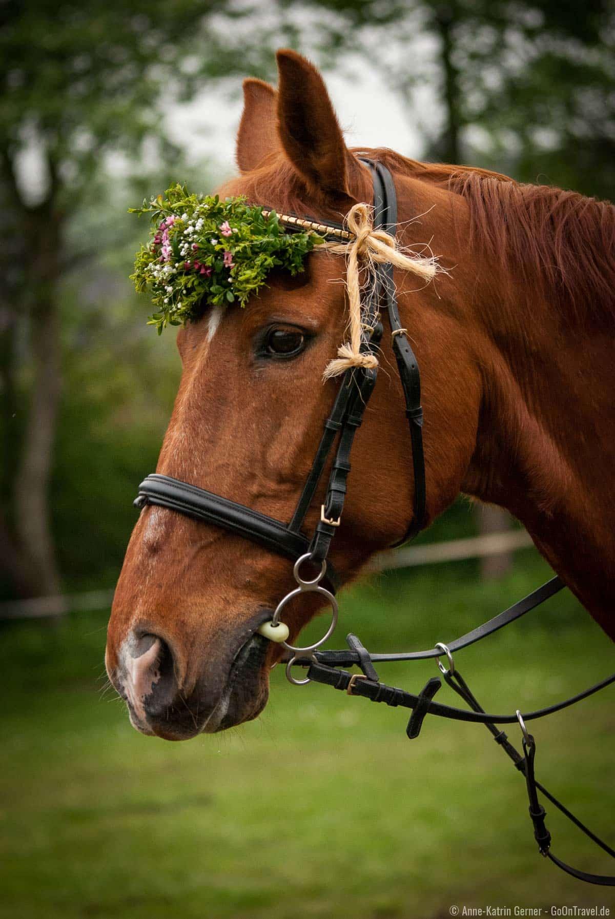 Geschmücktes Ringreiter Pferd