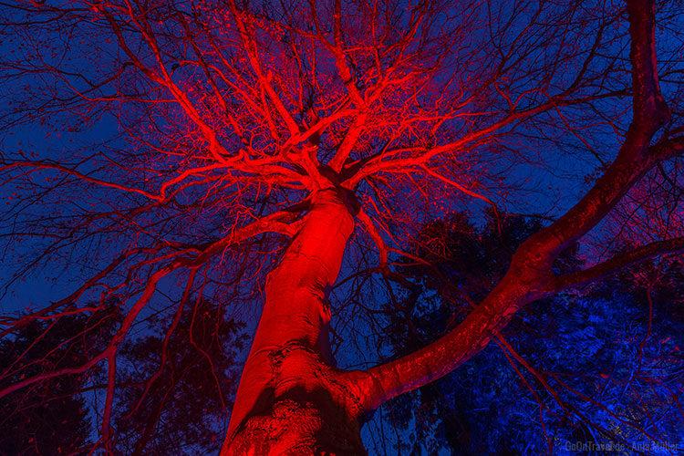 Ein rot angeleuchteter Baum wirkt vor unter dem dunkelblauen Himmel einfach magisch.