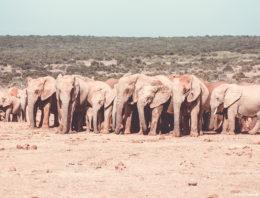 Addo Elephant Park: Informationen, Tipps und Tiere