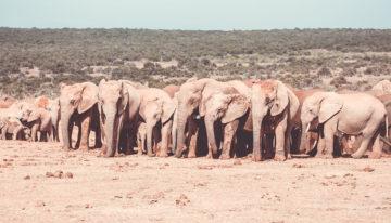 Addo Elephant National Park: Informationen, Tipps und Tiere