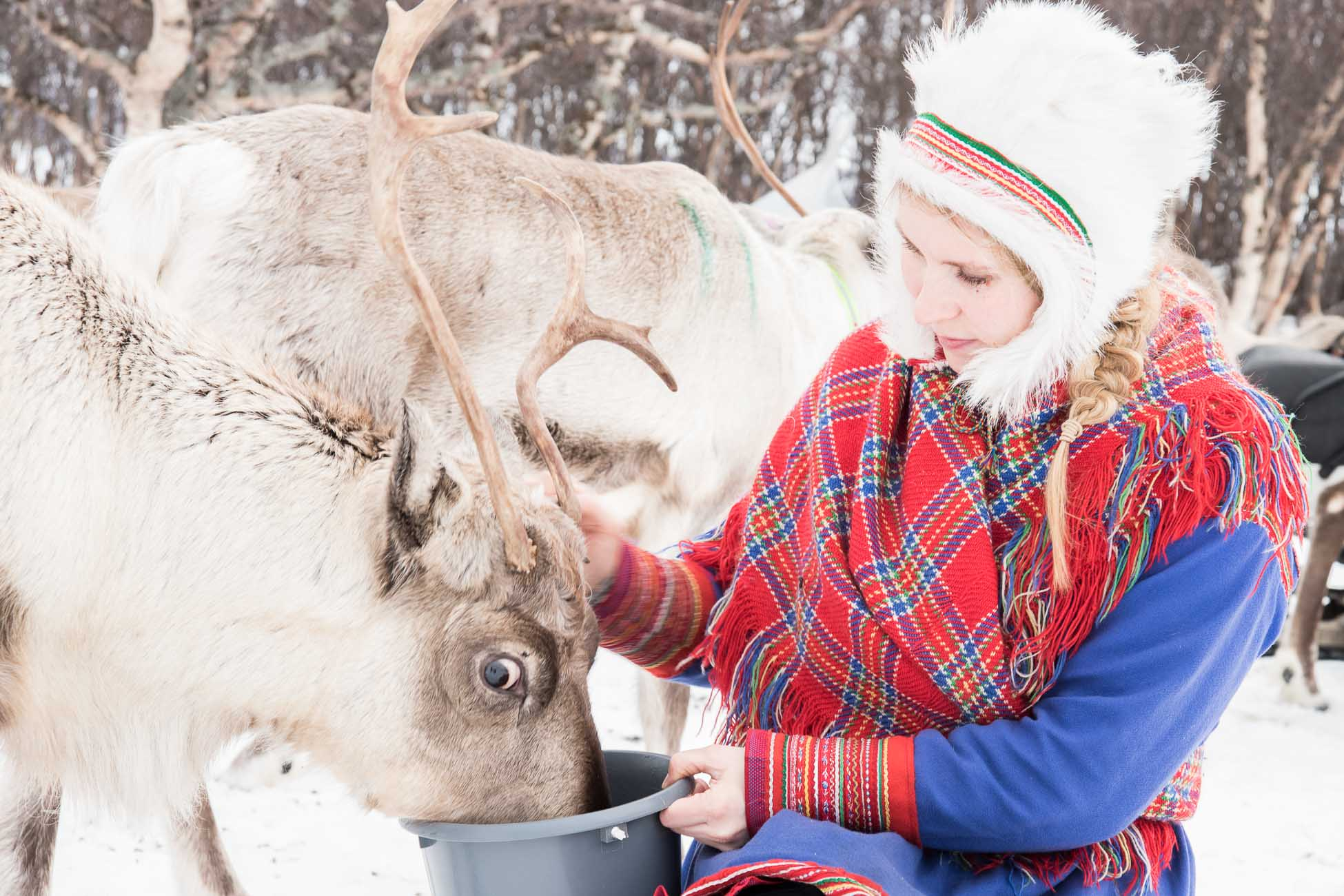 Sami Norwegen Rentiere Tromso