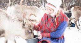 Ein Tag bei den Sámi und ihren Rentieren in Tromsø
