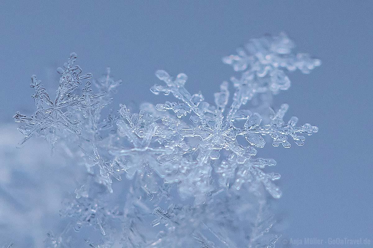Schneeflocken fotografieren im Gegenlicht