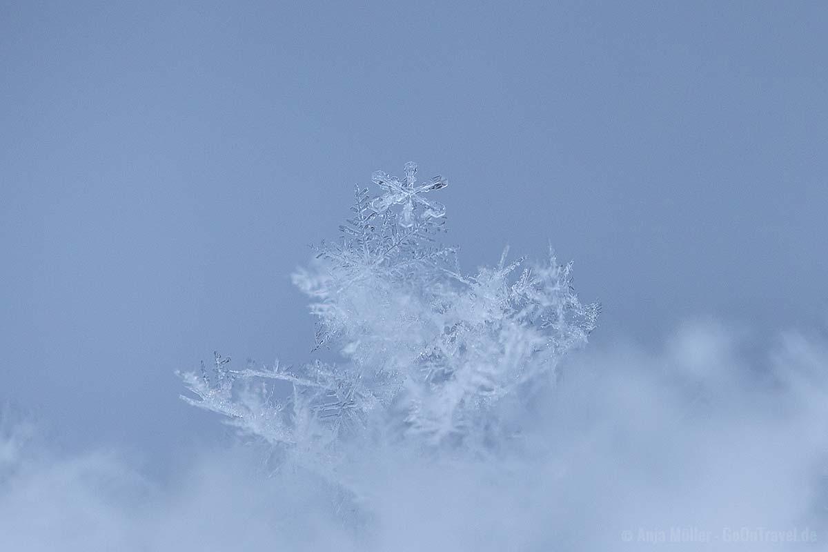 Schneeflocken fotografieren: Jeder Eiskristall ist einzigartig