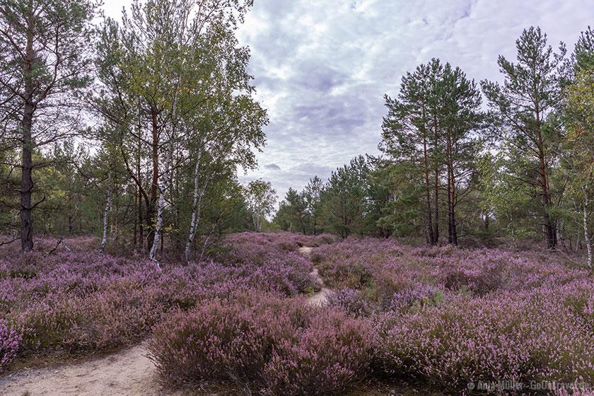 Saarmunder Heide in Brandenburg