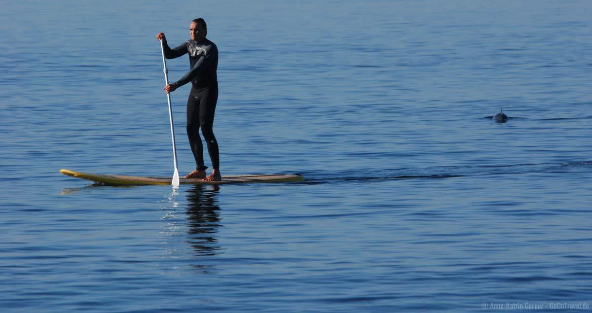 Schweinswale lassen sich auf Sylt ganz leicht vom Strand aus beobachten.