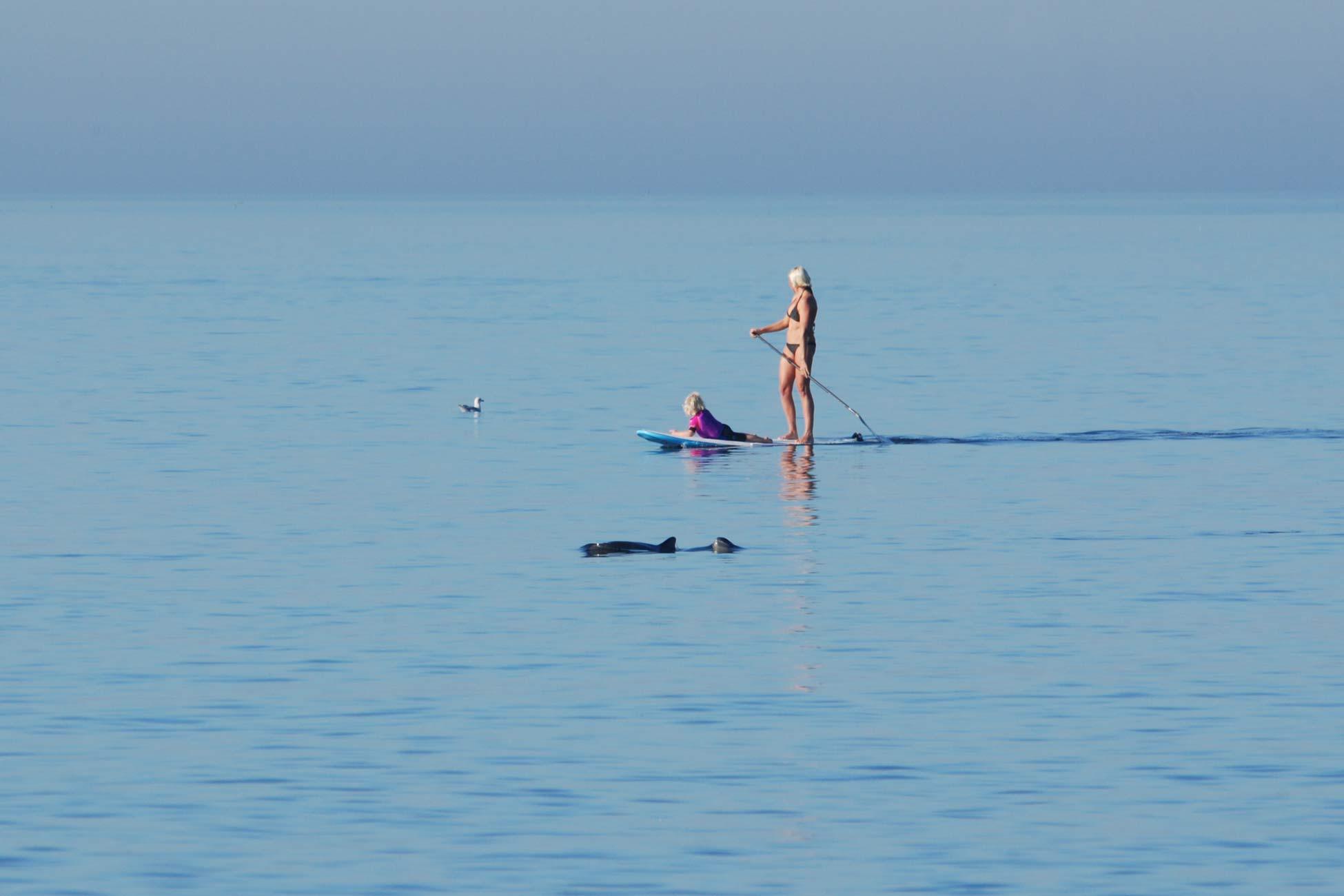 Schweinswale vor Sylt SUP Surfer