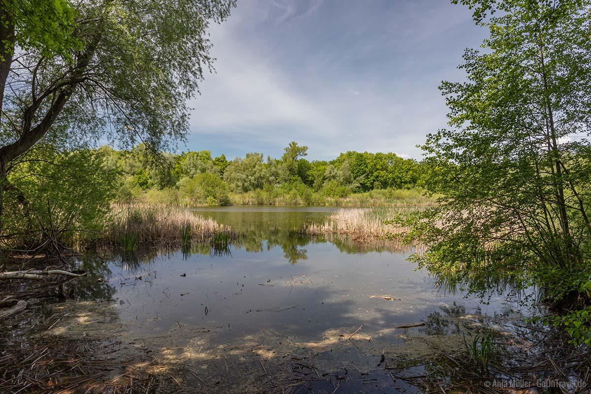 Aussichtspunkt am Faulen See