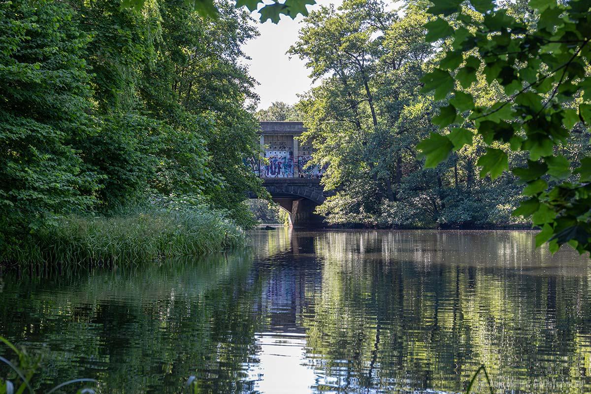 Ufer am Feensee
