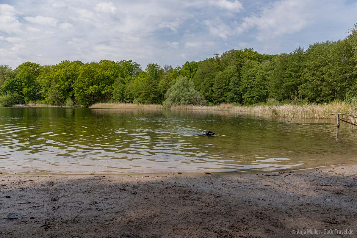 Der Grunewaldsee ist ein beliebter Badesee für Hunde