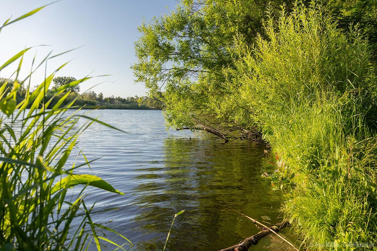 Uferidylle am Hermsdorfer See