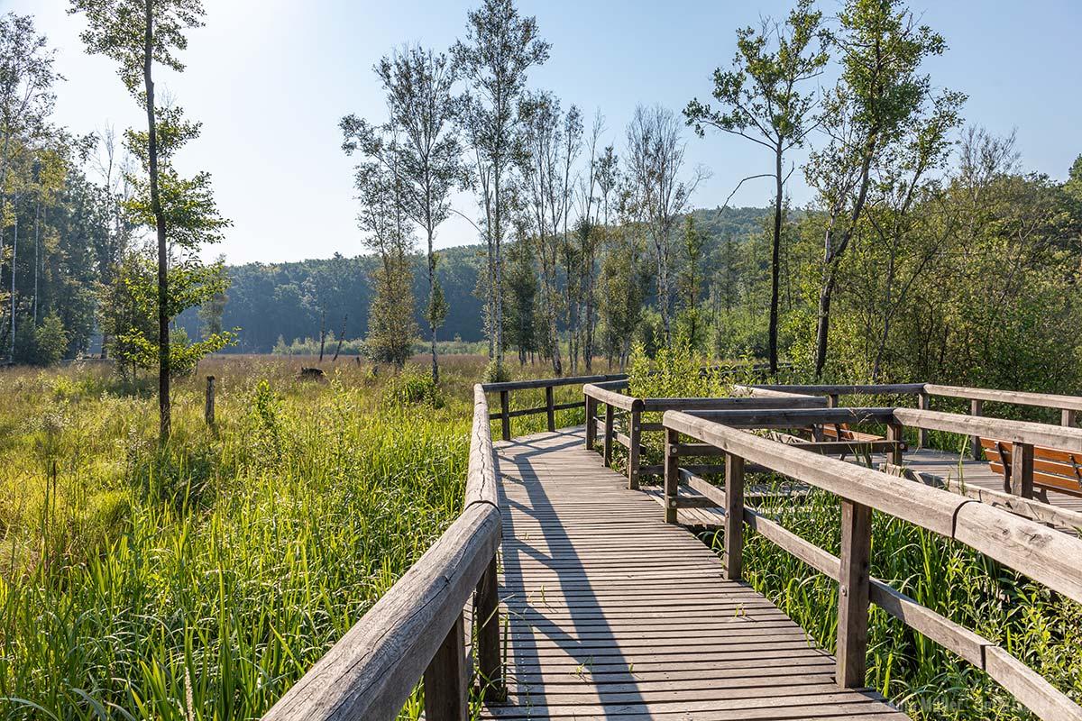 Holzsteg entlang des Sees