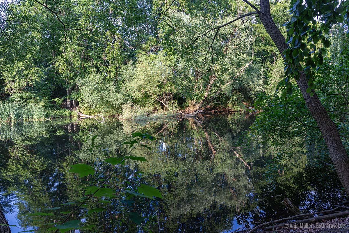 Möwensee im Volkspark Rehberge