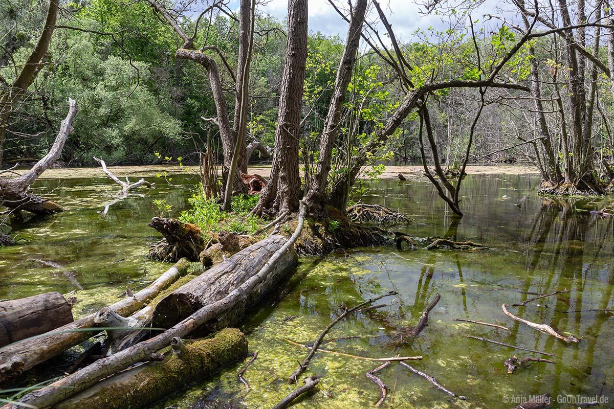 Uferansicht am Niklassee