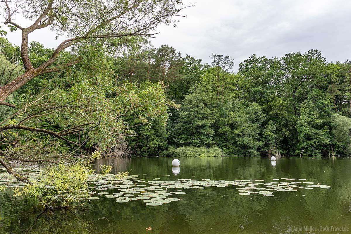 Naturschutzgebiet Teufelsfenn am Ufer des Teufelssee