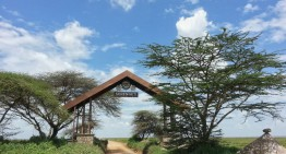 Serengeti – grenzenlose Tierwelt