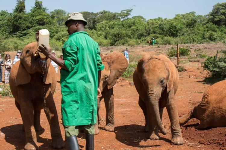 Sheldrick Wildlife Trust Nairobi