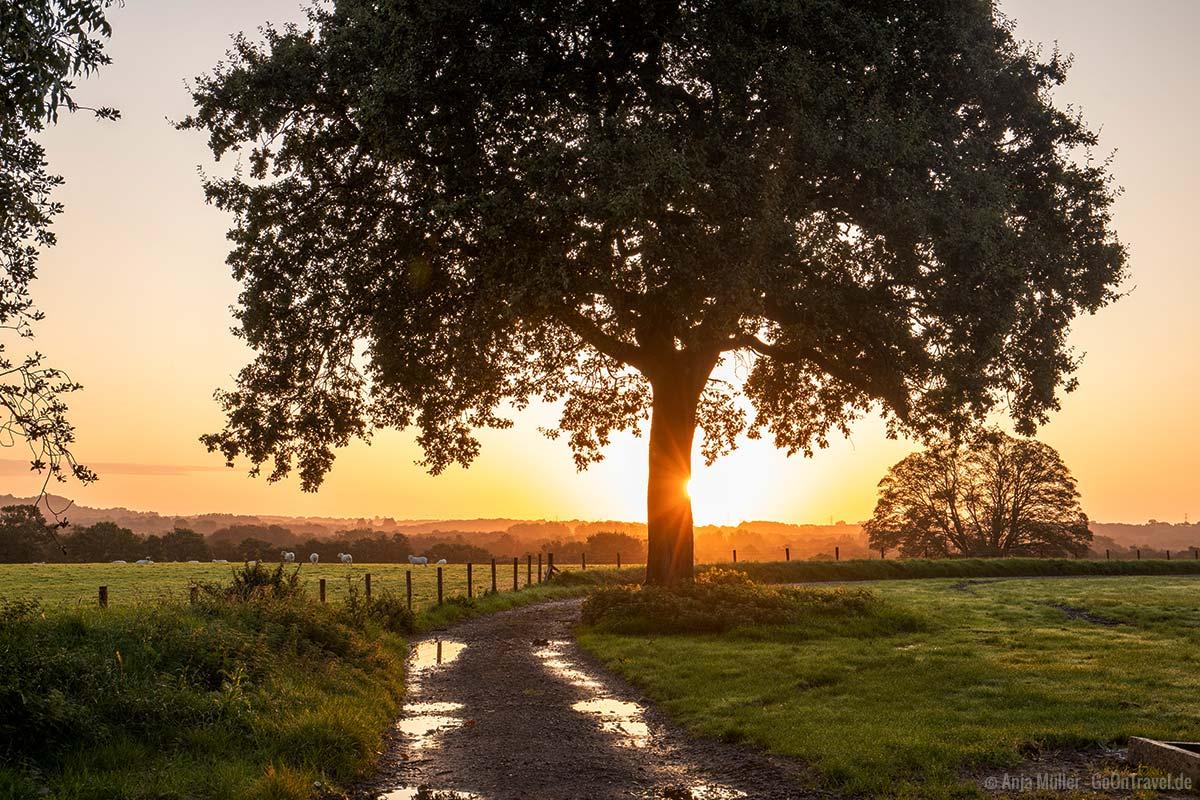 Sonnenaufgang in Wales