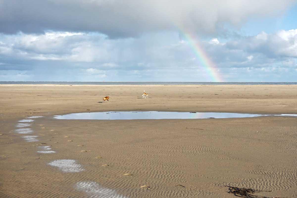 Für Hunde der ideale Strand zum Toben
