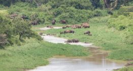Hluhluwe iMfolozi Park: Der älteste Nationalpark Südafrikas
