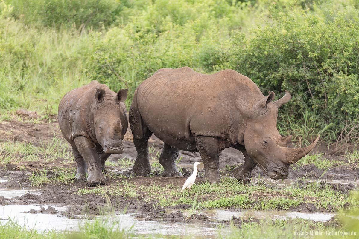 Ein Nashorn mit ihrem Jungen