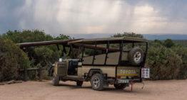 Geführte Safari oder Selbstfahrer – ein Vergleich