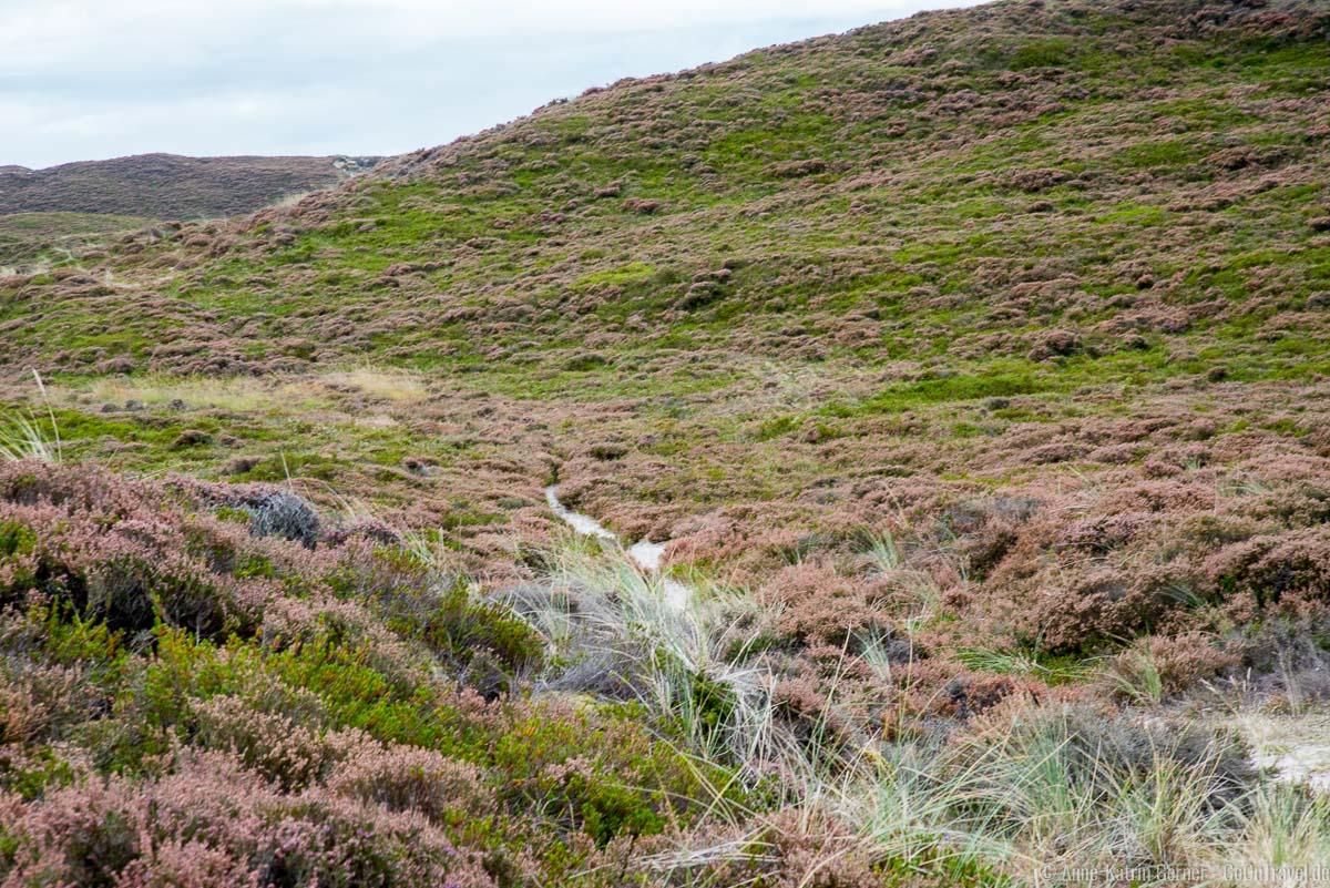 Auf einem alten Schafsweg geht es zur Wanderdüne