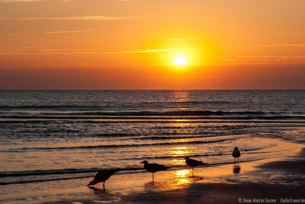 Sonnenuntergang mit Möwen