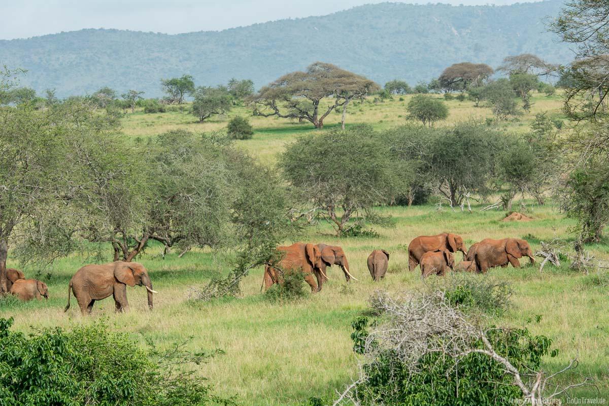 Elefantenfamilie in Taita Hills