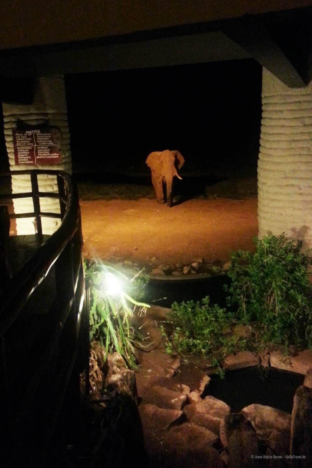 Elefant vor der Lobby in der Salt Lick Lodge